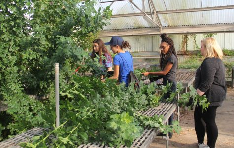 In September, students remove overgrown vines during the greenhouse restoration.  The project coordinated student organizations, individuals and local community groups.